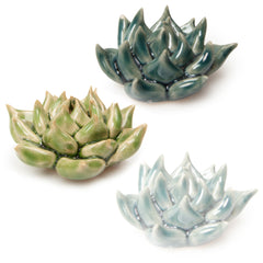 Coral 3 - Set of 3 Small Succulents - Chive Wholesale
