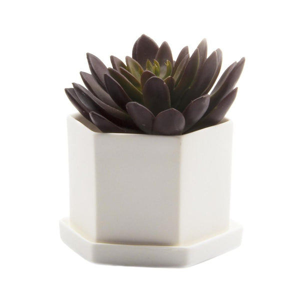 Small Hexi Pot & Saucer - Chive Wholesale