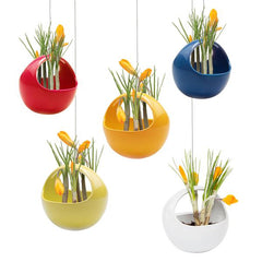 Hanging Aerium - Kit - Chive Wholesale