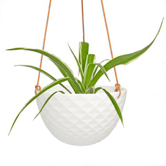 Mini Mofo Hanging Succulent Dish - Chive Wholesale