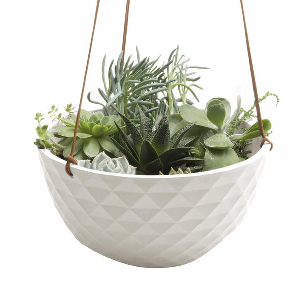 Mofo Hanging Succulent Dish - Chive Wholesale