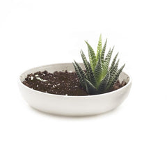 Moog Succulent Dish - Kit - Chive Wholesale