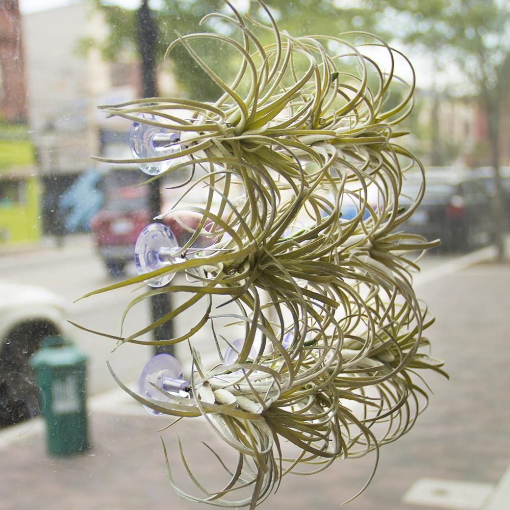 Air Plant Holder Chive Wholesale