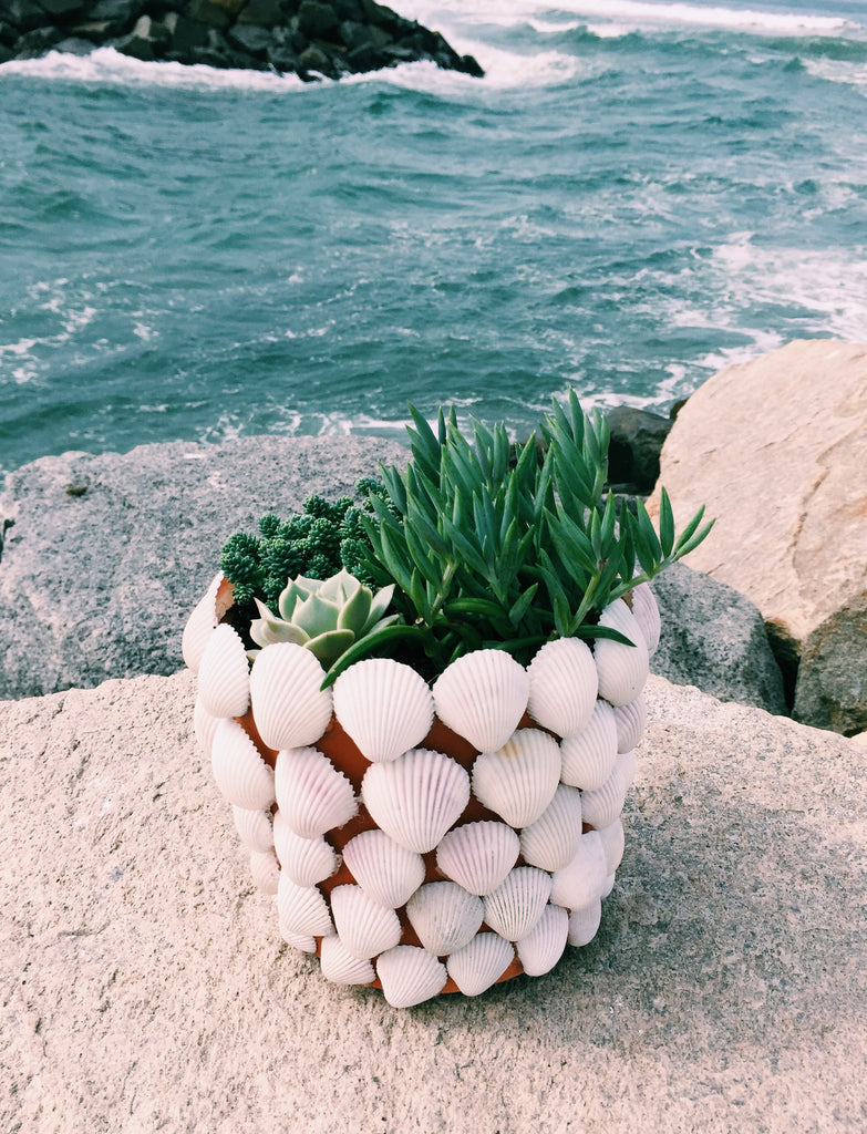 Seaside & Succulents