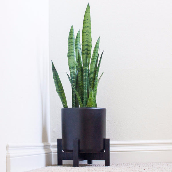 Modern Planter with Plant Stand - Small