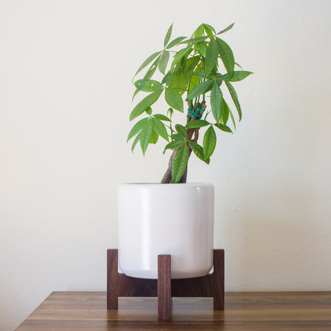 Modern Planter with Plant Stand - Tabletop Cylinder