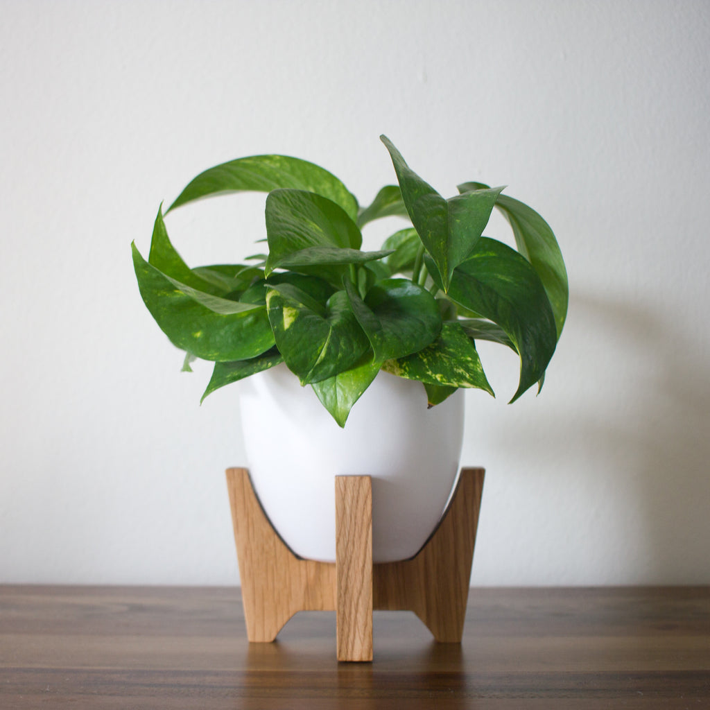 Modern Planter With Plant Stand   Tabletop Bell ...