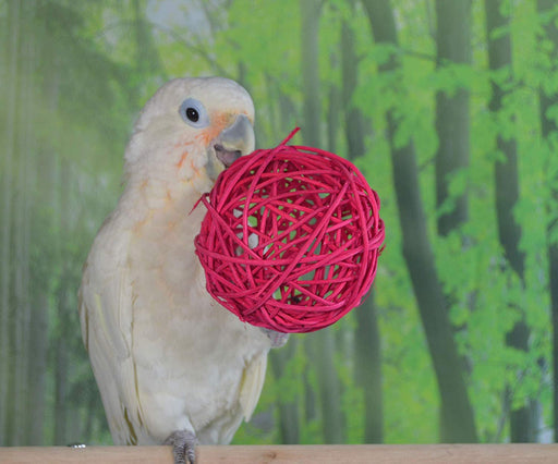 Birds LOVE 8 Large 5 in Pack Foraging Wicker Rattan Toy Colorful Chewing Balls Birds Vine Ball Cage for Parrots Hamster Bunny Rabbits Guinea Pigs Cats – Large