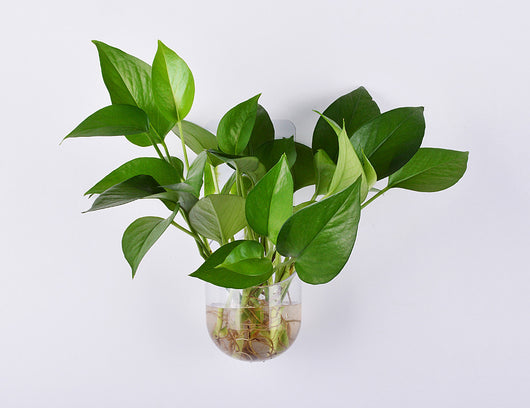 Wall / Window Mount Vase / Planter, Removable & Reusable, Clear with Green Back Pattern-The Cleaning Girl 2