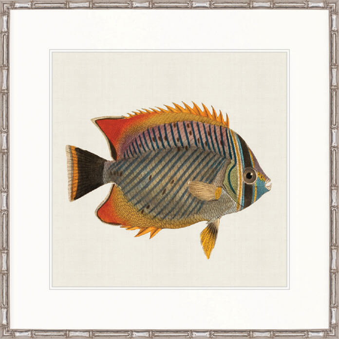 Designer Boys Art |  Colourful Fish I  | Framed Prints | Artwork | Gav & Waz Print | Buy online