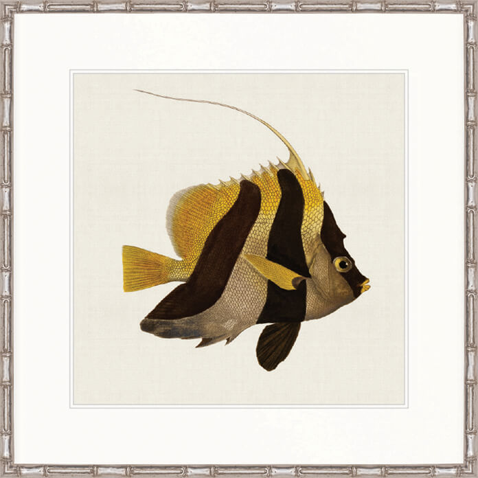 Designer Boys Art |  Colourful Fish II  | Framed Prints | Artwork | Gav & Waz Print | Buy online