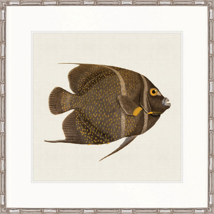 Designer Boys Art |  Colourful Fish III  | Framed Prints | Artwork | Gav & Waz Print | Buy online