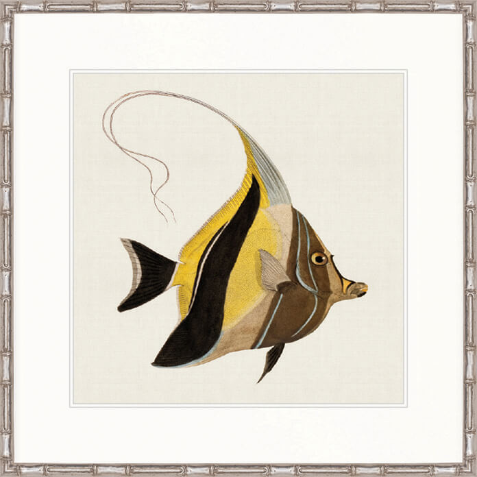 Designer Boys Art |  Colourful Fish IV  | print, interior design, homewares, Framed Prints | Artwork | Gav & Waz Print | Buy online