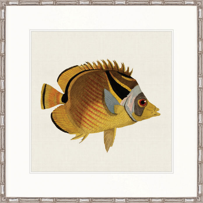 Designer Boys Art |  Colourful Fish VI  | print, interior design, homewares, Framed Prints | Artwork | Gav & Waz Print | Buy online