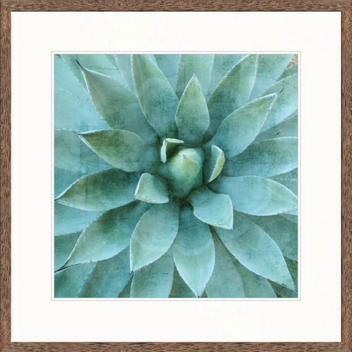 Designer Boys Art |  Desert Succulent I  | Framed Prints | Artwork | Gav & Waz Print | Buy online