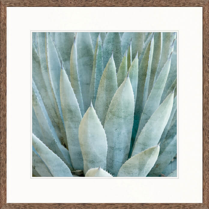 Designer Boys Art |  Desert Succulent III  | Framed Prints | Artwork | Gav & Waz Print | Buy online