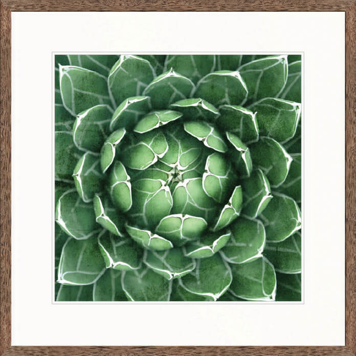 Designer Boys Art |  Desert Succulent IV  | Framed Prints | Artwork | Gav & Waz Print | Buy online