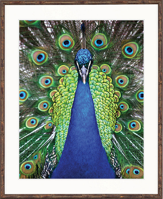 Designer Boys Art  |  Peacock Splendour II |  Express Shipping  |  Gav and Waz  |  print, canvas, interior design, homewares | Framed Prints | Artwork | Gav & Waz Print | Buy online