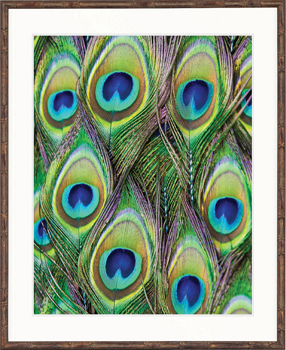Designer Boys Art  |  Peacock Splendour VI |  Express Shipping  |  Gav and Waz  |  print, canvas, interior design, homewares | Framed Prints | Artwork | Gav & Waz Print | Buy online
