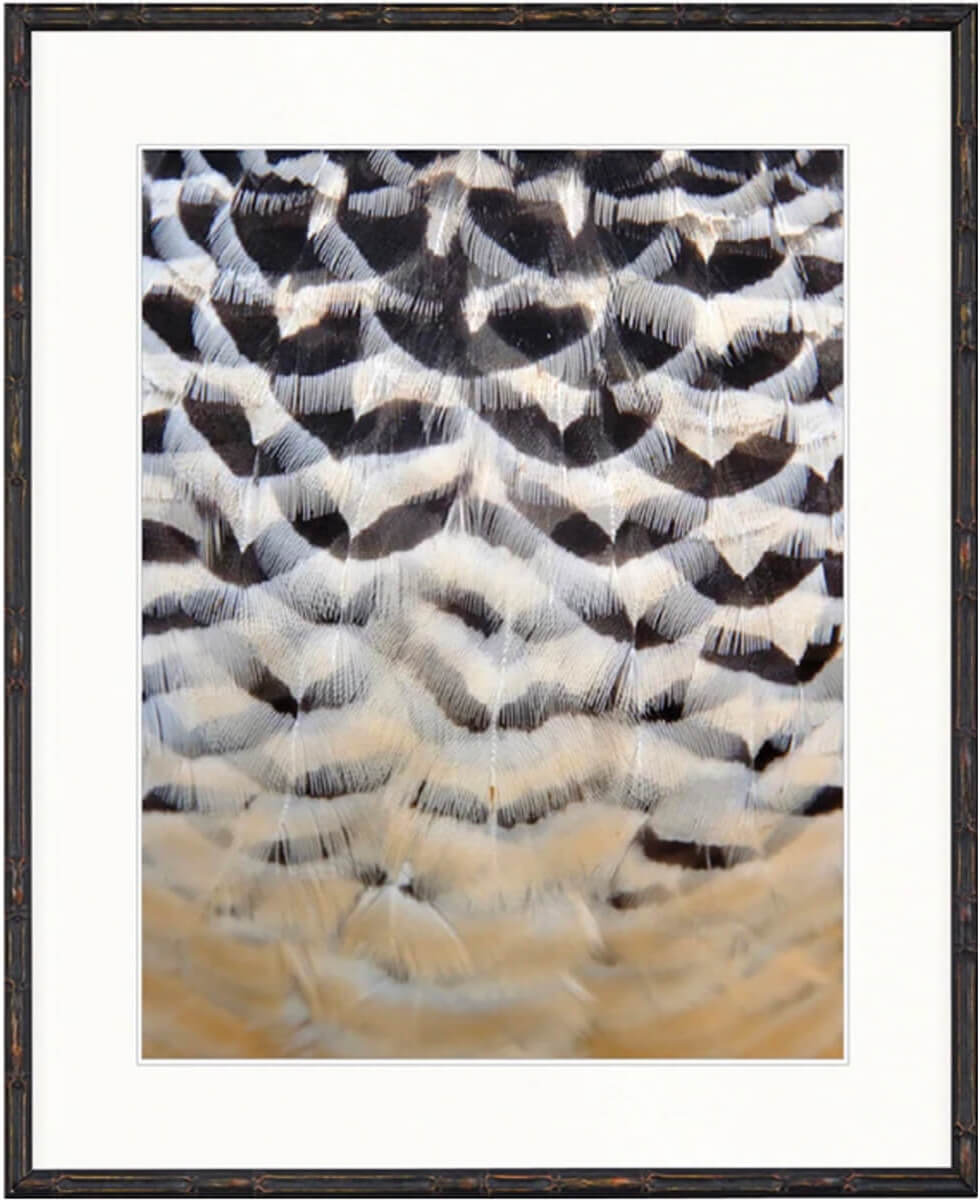 DESIGNER BOYS ART  |  ASHBURY FEATHER COLLECTION |  SIMPLE FEATHER IV