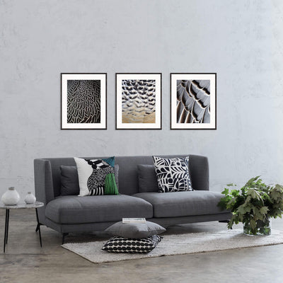 Designer Boys Art | Ashbury Feather Collection | Simple Feather II | Framed Prints | Artwork | Gav & Waz Print | Buy online