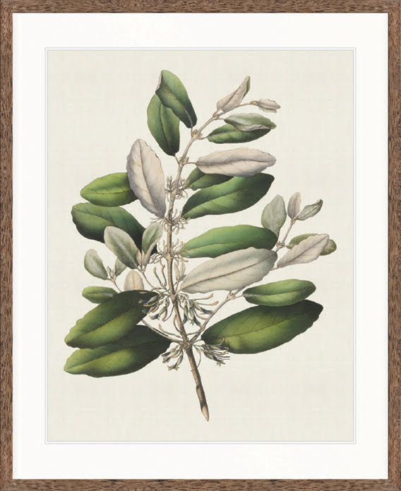 Designer Boys Art |  Botanical Bliss I  | Framed Prints | Artwork | Gav & Waz Print | Buy online