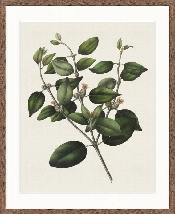 Designer Boys Art |  Botanical Bliss IV  | Framed Prints | Artwork | Gav & Waz Print | Buy online