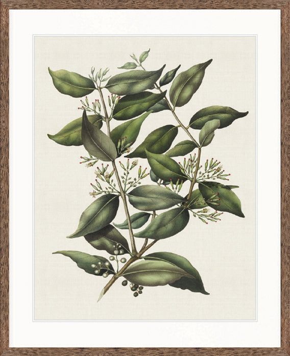 Designer Boys Art |  Botanical Bliss V  | Framed Prints | Artwork | Gav & Waz Print | Buy online