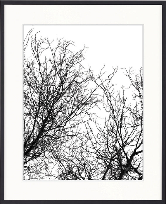 Designer Boys Art |  Hyde Park Tree Silhouette I  | Framed Prints | Artwork | Gav & Waz Print | Buy online