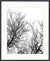 Designer Boys Art  |  Hyde Park Tree Silhouette I  |  Gav and Waz  |  Artwork, wall art, print, canvas, interior design, homewares