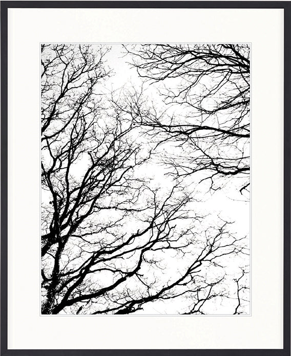 DESIGNER BOYS ART  |  HYDE PARK TREE SILHOUETTE II  |  PRINTED ARTWORK
