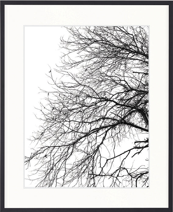 Designer Boys Art Hyde Park Tree Silhouette Iii Printed Artwork