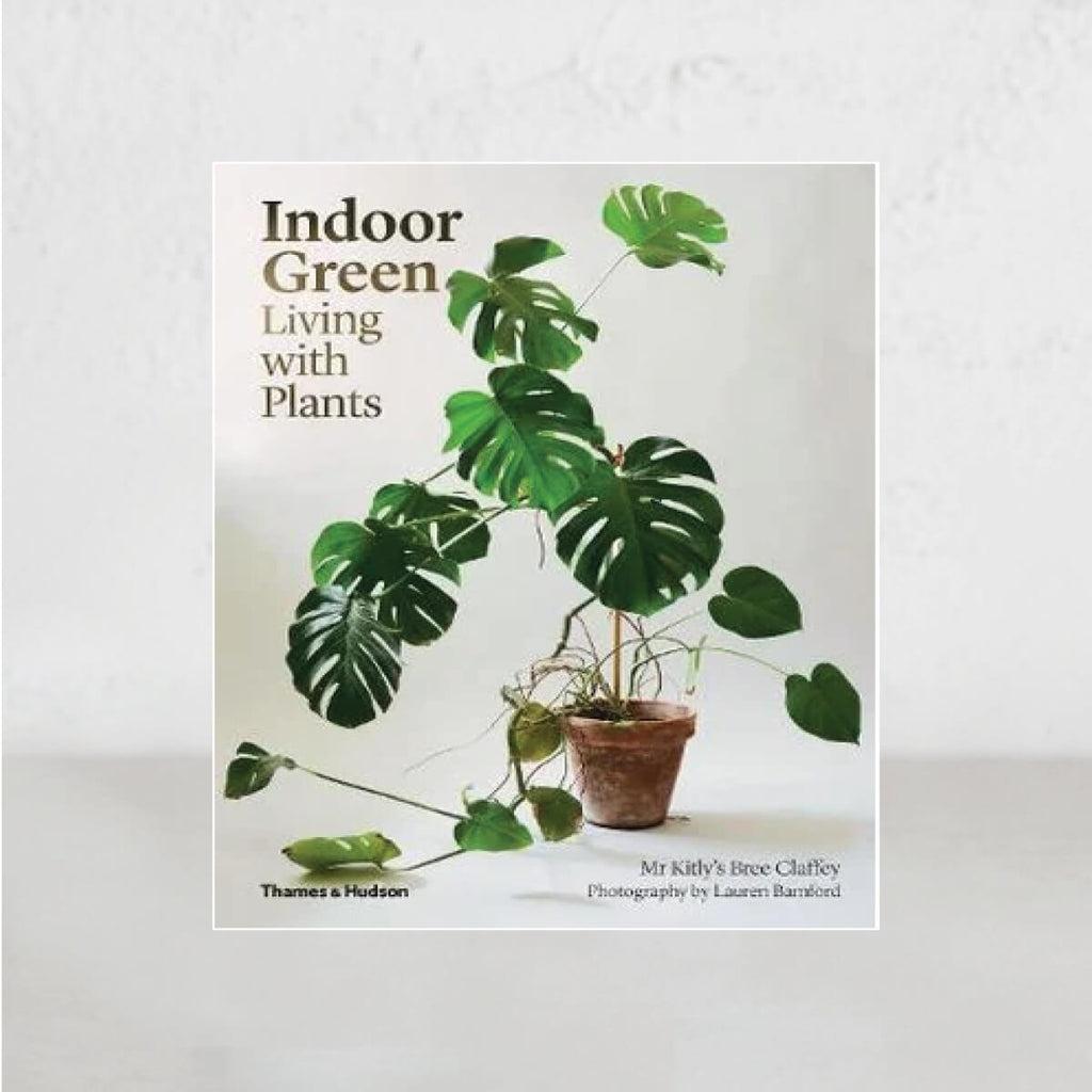 INDOOR GREEN |  LIVING WITH PLANTS  |  Mr Kitly's Bree Claffey