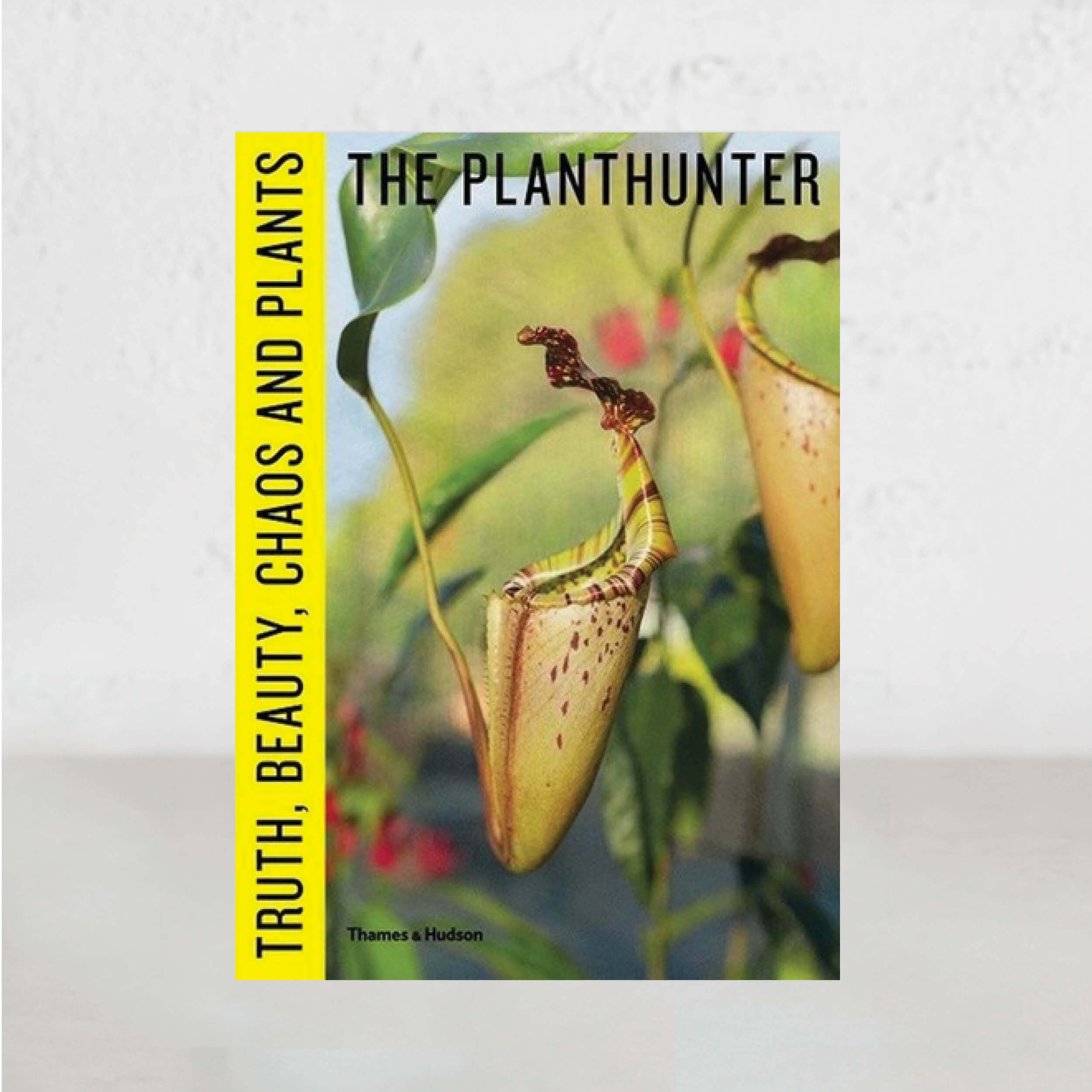 THE PLANT HUNTER  |   TRUTH, BEAUTY CHAOS & PLANTS