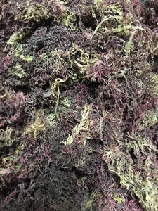 Purple Sea Moss 1/2 Pound