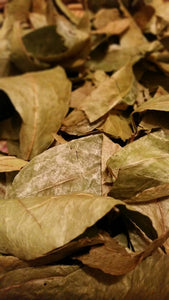 Jamaican Sour Sop Leaves