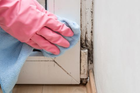 Clean your home carefully to remove mold