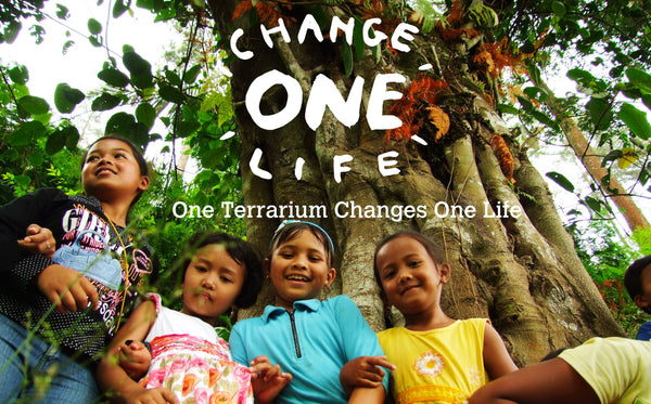 Change one life began with the simple idea of enriching your life and environment.One terrarium changes one life.