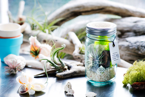 Terrarium kit with vintage blue glass jar. Jar terrarium with Tillandsia Ionantha Air plant