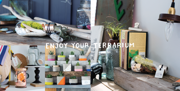 Enjoy your unique terrarium or vegetable kit