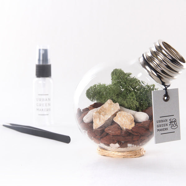 Kit #2 - Glass Bulb Terrarium - URBAN GREEN MAKERS