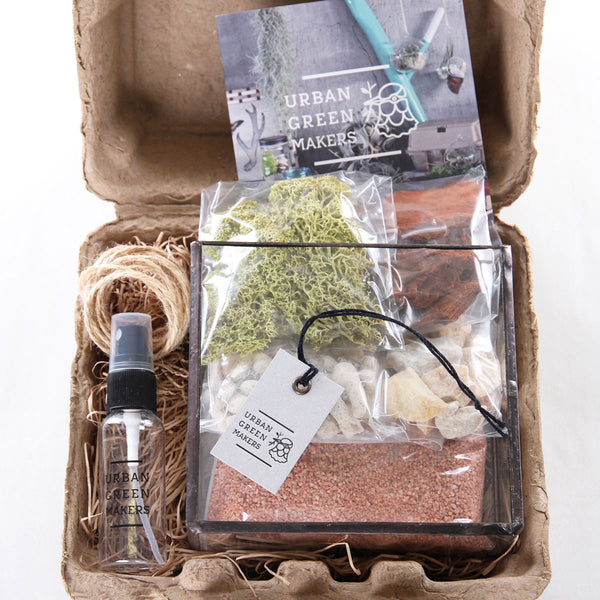 Kit #4 - Glass Brass Box Terrarium - URBAN GREEN MAKERS