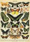 Cavallini | Poster Gift Wrap | Butterflies