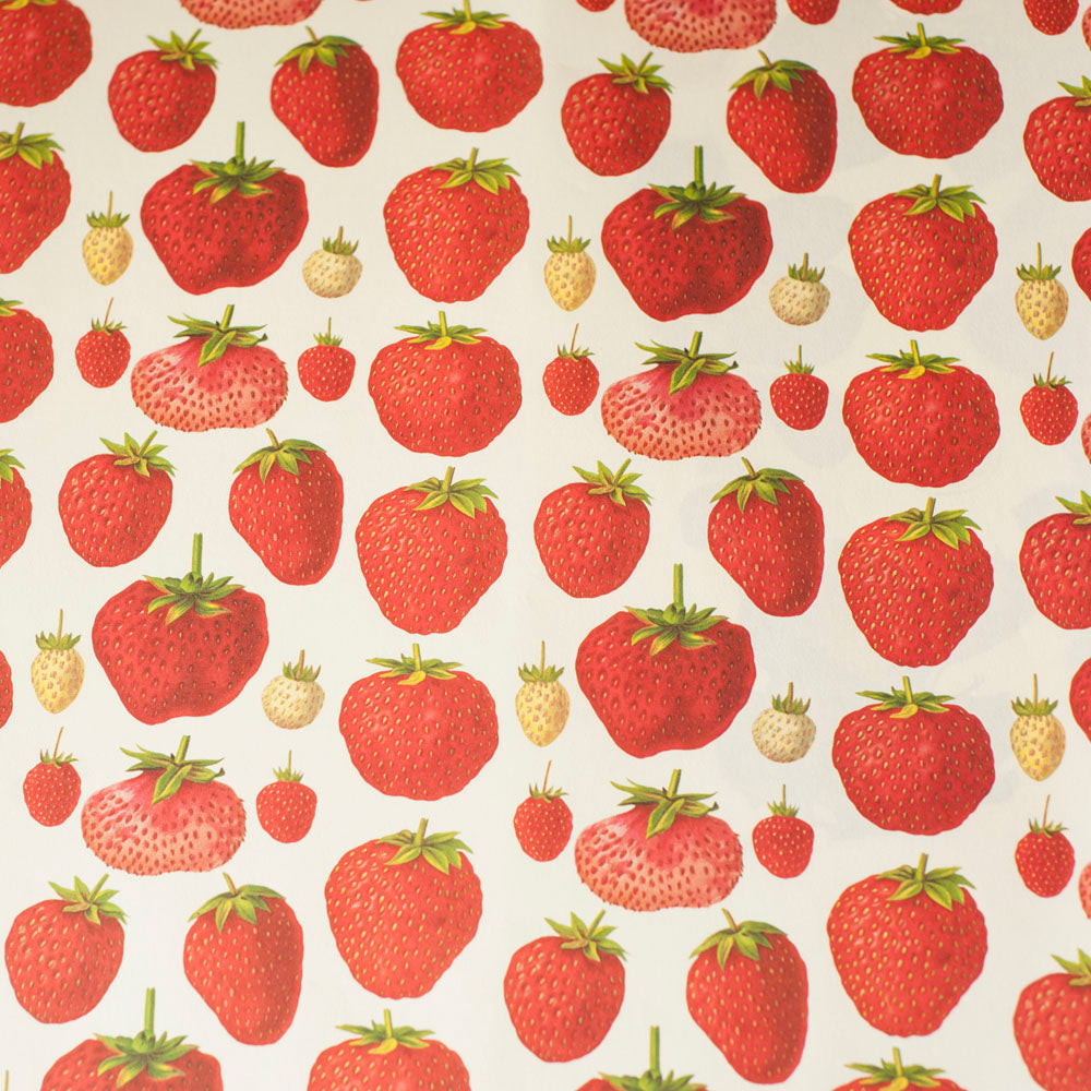 RoFRT009: Rossi Strawberries Paper