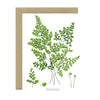 Card | Maidenhair Fern