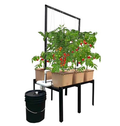 Hydroponic Vine Crop Grower 6 + Grower's Kit