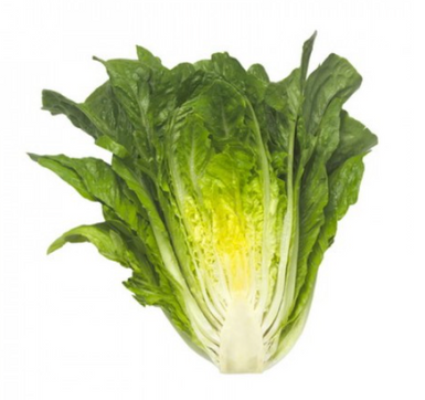 Rijk Zwaan MAXIMUS RZ (41-95)) Cos Lettuce (Pack of 5000)