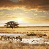 Animals in South Africa Kalahari desert