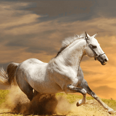 Horse stallion run gallop in dust desert