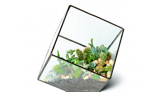 Succulents in a clear glass jar | Aroma Foundry